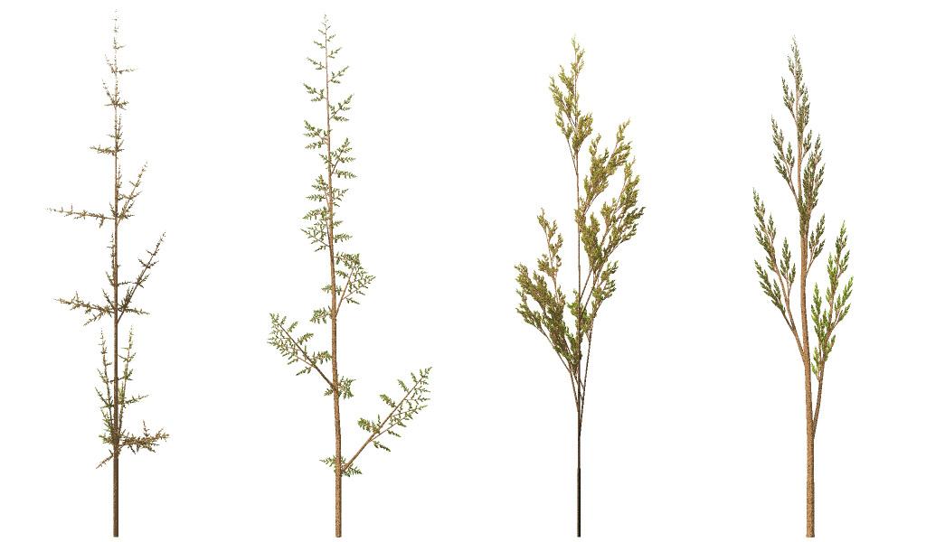 Fractal Weeds